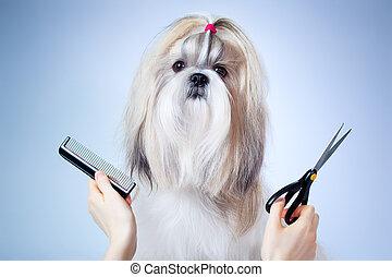 手入れをすること, tzu, shih, 犬