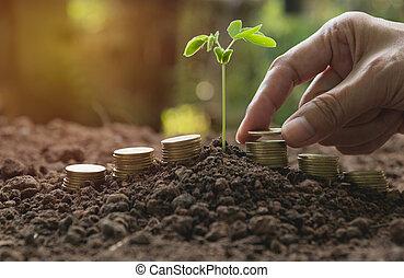 手, そして, 若い, 緑のプラント, ∥で∥, 山, コイン, 上に, 地面, ∥ために∥, 成長する, ビジネス,...
