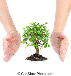 手, のまわり, 木, 小さい