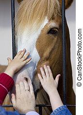 手, ストローク, 馬