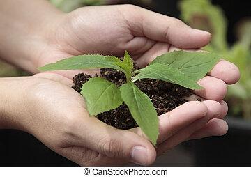 手, 保有物, 苗木, 中に, 土壌