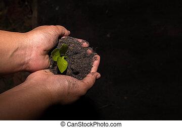 手, 保有物, 苗木, 中に, 土壌, 表面, 中に, 暗闇