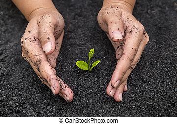 手, 保有物, 苗木, 中に, 土壌, 表面