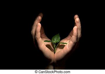 手, 保有物, 苗木