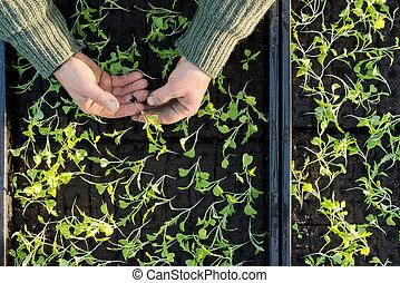 手, 保有物, a, 苗木, ∥で∥, 実生植物, 箱, 中に, 背景