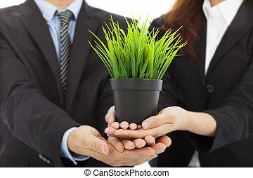 手, 在中, 商务人士, 握住, 绿色, sapling.