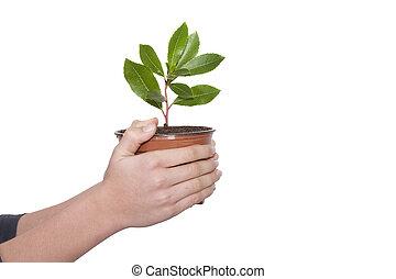 手, 带, 树