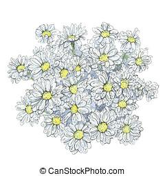 手, 引かれる, グラフィック, 花, golden-daisy, 白, 背景