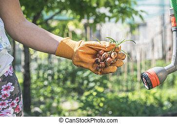 手, 握住, 植物, 燈泡, 在, a, 花園