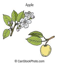 手, 木, アップル, ブランチ, 図画