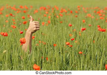 手, 由于, 上的姆指, 在中間, ......的, a, 草地