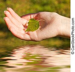 手, 由于, a, 葉子, 在上方, 提供, 水