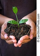手, 藏品, 年輕, plant.