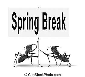 打破, 春天, 假日, 假期, 或者
