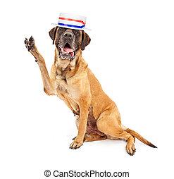 投票, 政治的である, 励ますこと, mastiff, 犬