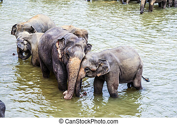 抱き合う, 川, 象