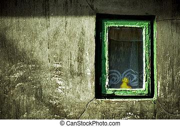 抽象的, グランジ, image:, duck-toy, 見る, から, 窓