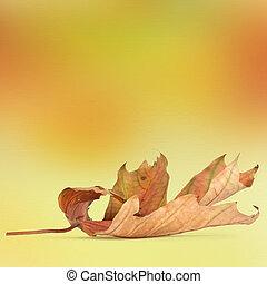 抽象的, 明るい, 秋, bokeh, 背景, 葉
