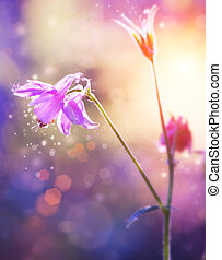 抽象的, 柔らかい, 花, flowers., 紫色, フォーカス, design.