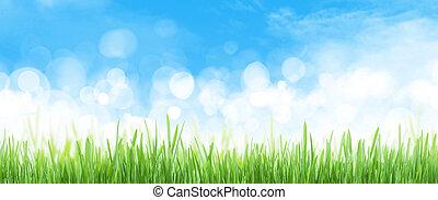 抽象的, 空背景, 芝生フィールド, 広く, 夏