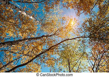 抽象的, 背景, 秋, 見る, desig, 太陽, あなたの