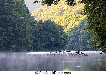 抽象的, 背景, 美しい, 美しさ, 植物学, ブランチ, 明るい, きれいにしなさい, 日, 環境, 霧, 群葉, 森林, 新たに, 白熱, 草, 緑, 成長, ハンガリー, impassable, 湖, 葉, アル中, マジック, 自然, 自然, 有機体である, 屋外で, 平和, 植物, 反射, 川, 景色, 春, 夏, 日光, 日当たりが良い, 穏やかである, 木, トロピカル, 水, 滝, 波, 野生, 森