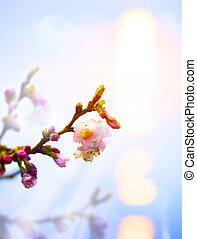 抽象的, 背景, 花, 春, ピンク, 美しい