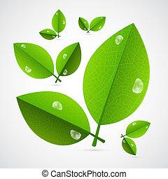 抽象的, 隔離された, ベクトル, 緑の背景, 白, 葉