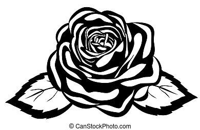 抽象的, 黒い、そして白い, rose., クローズアップ, 隔離された, 白, 背景