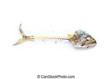 抽象的, fish, 飢餓, 骨, 空腹