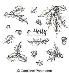 招待, スケッチ, セット, ポスター, カード, 型, decoration., 手, 伝統的である, branches., デザイン, banner., 引かれる, 西洋ヒイラギ, 休日, style., クリスマス