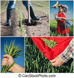 拼貼藝術, 農業