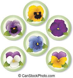 按鈕, 跳躍, 三色紫羅蘭, 向上, 約翰尼