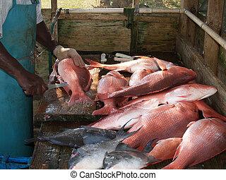 捕獲物, 漁師, 清掃, 日々
