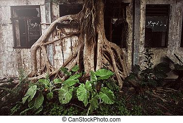 捨てられた, 窓, 家, 木, ingrown, 大きい, wth, roots., smashed.