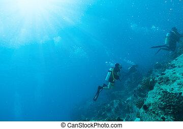探検, グループ, 底, ダイバー, 海, スキューバ