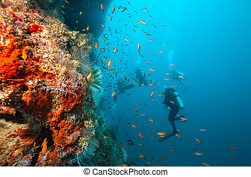 探検, グループ, 珊瑚, スキューバ, 砂洲, ダイバー