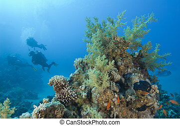 探検, 珊瑚, スキューバ, トロピカル, 砂洲, ダイバー