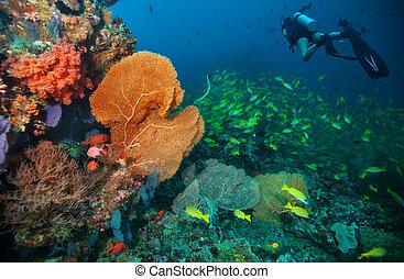 探検, 珊瑚, スキューバ, 砂洲, ダイバー