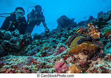 探検, 珊瑚, 2, スキューバ, 砂洲, ダイバー