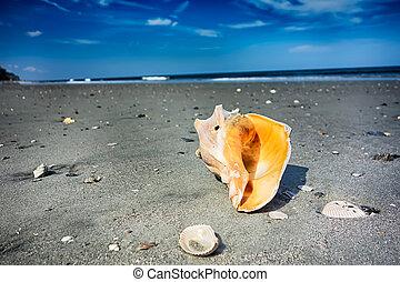 探求, 浜, 現場, 島