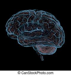 接続, 脳, 人間, 力