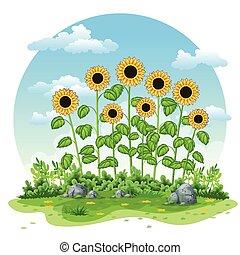 描述, 在中, 一, 风景, 带, 向日葵