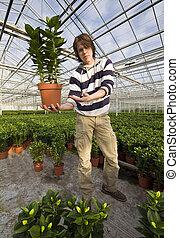 提示, 植物