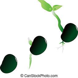 插圖, ......的, 階段, ......的, 成長, ......的, 植物