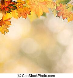 摘要, 秋天, 背景, 機智, 黃色, 楓樹, 葉子