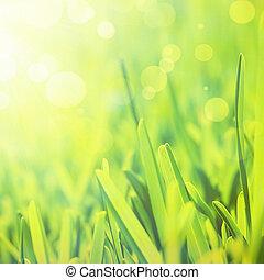 摘要, 草, 背景