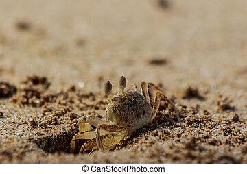 操業, 海, thailand., カニ, 前方へ, 浜, 砂