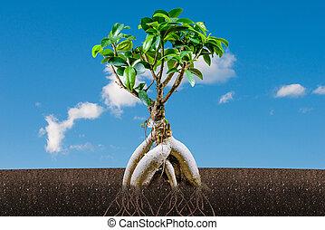 支持できる, 成長, concept:, bonsai の 木, と青, 空