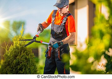 支持, 園丁, 植物, 修剪